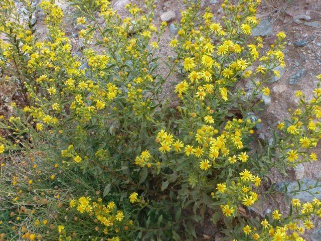 Ouigrane-Anammer-fleurs d'été et d'automne