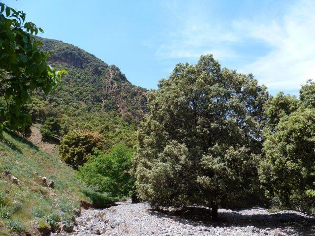 Réserve des mouflons-arbres