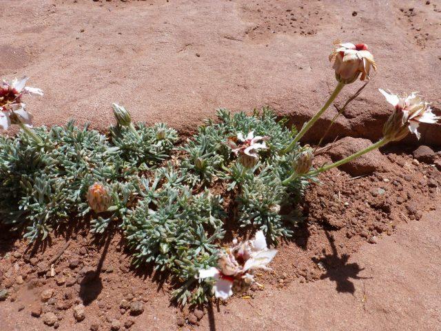Ouka-terrains secs, rochers