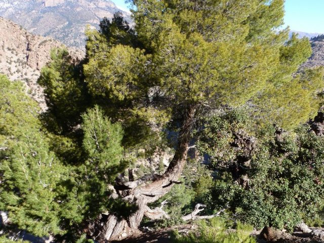 Plateau de Tafenfent-arbres