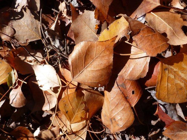 17.12.03.Assif Gadgi-Aït bou Saïd. arbres d'automne