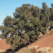 17.12.10.les chênes-liège de Tidili-paysages
