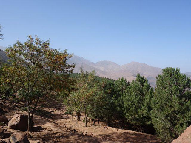 reboisement sous le Jbel Tamadout en versant nord