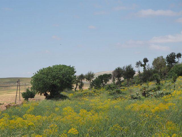 cimetières sur le plateau du Kik