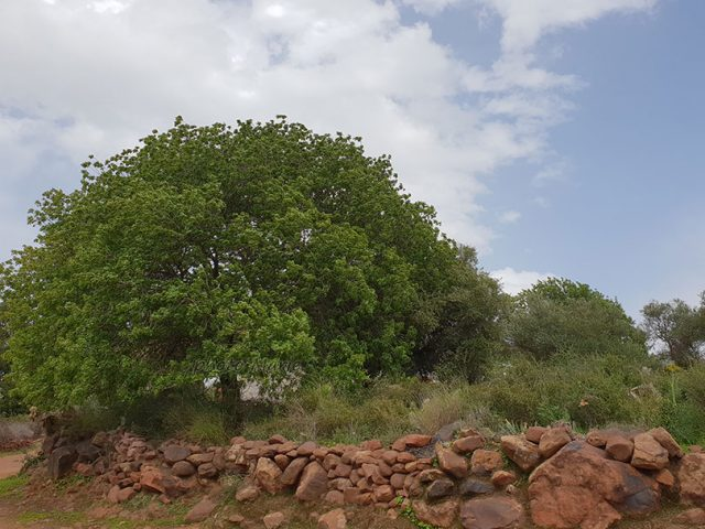 cimetières des Mesfiwa ( Gadgi, Zat)